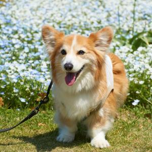 突然の愛犬との別れになるかも!よく見かけるけど絶対NGな飼い主の5つの行動!