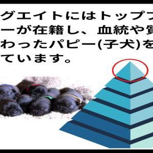 第三章 「フレンチブルドッグの毛色の選び方」のお勉強!