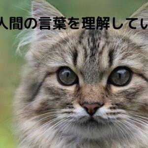 猫は人間の言葉を理解している?【人間と猫の脳の違いについて】