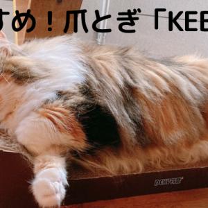 猫の爪とぎ「KEBIK」。二つ合わせれば広々ベッドにも!