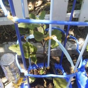 だいちゃんの植木鉢