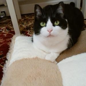 地域猫から家猫になるまで③ せまい部屋から3LDKの部屋に引っ越し