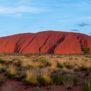 オーストラリア原産の植物、3つほど調べてみました🐏