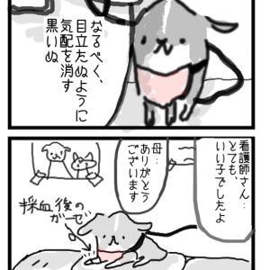 忍者 黒いぬ