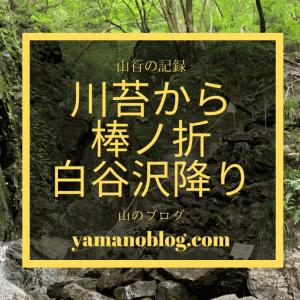山行の記録|白谷沢は夏にオススメ!川苔山から棒ノ折山へ越境登山