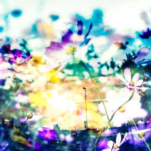My favorite artist〜Nujabes〜