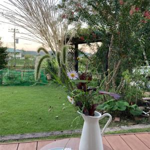 昨夜の名月月見と今朝の庭