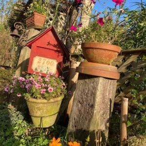 秋冬野菜植え付けと紫蘇の実取り