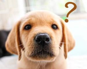 犬のしつけが失敗する人の特徴について!