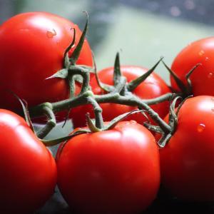 【糖尿病】トマトと糖質と血糖値