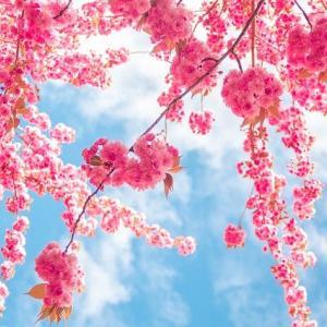 薄桜鬼という沼にハマる