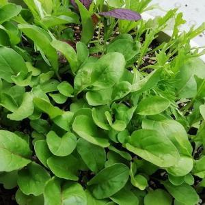 メルカリで植物を買う【2021年5月のベランダより】