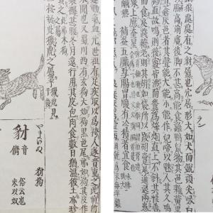 ニホンオオカミのこと〜part《7》オオカミとヤマイヌ