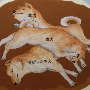 「いのち」との向き合い方 〜縄文の犬