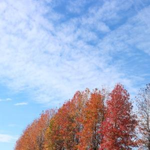 せっかく気持ちよく秋を感じていたのに