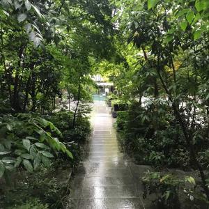 福徳の森の朝活 2日連続で雨