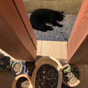 猫ちゃんと多肉植物と残念だったジブリ美術館