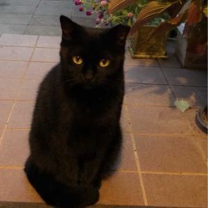イジメ猫ちゃんが怖いけど、家の中も怖い黒猫ちゃん