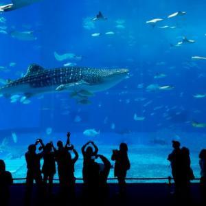 付き合う前の水族館デートはメリットしかない!おすすめの水族館も公開