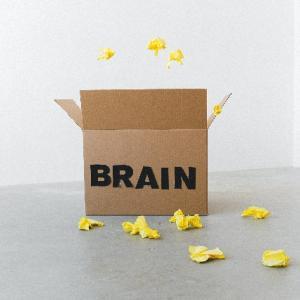 断酒と脳の関係性