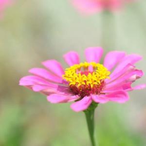 市民の森の花たち