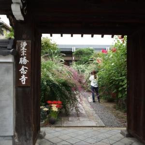 萩の寺「伏見勝念寺」