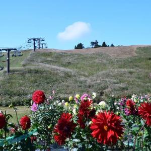箱館山のダリア園