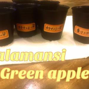 カラマンシー&青リンゴ♥