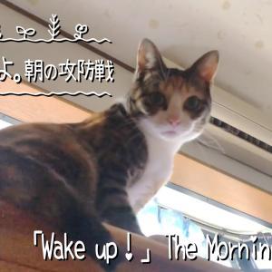 早く起きてよ。朝の攻防戦【保護猫お預かり中です】