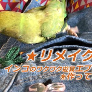 インコのワクワク遊具エプロンを作ってみた【DIY】