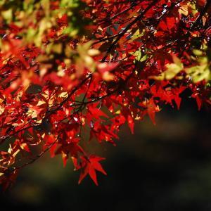 新宿から1時間以内で行ける人気観光地 気軽に登れる高尾山は、紅葉とおいしい団子が楽しめます