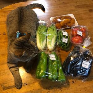 お出かけしたので鏡野の夢広場でお野菜買ってきたらまさかのww