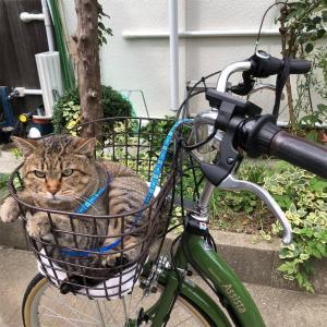 プーチンさん電動自転車でルンルンルン♪