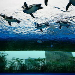 「サンシャイン水族館」と「すみだ水族館」の比較。小さい子供を連れていくならどちらがおすすめ?