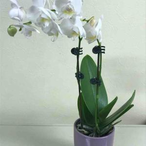 【道の駅とよはしレポ】お花を飾って農家を応援!~食彩村花マルシェ~