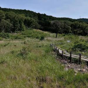 「豊橋の自然スポット~葦毛湿原~」
