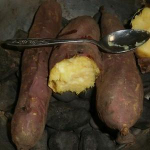 ブロッコリーとサツマイモの発芽&焼き芋~
