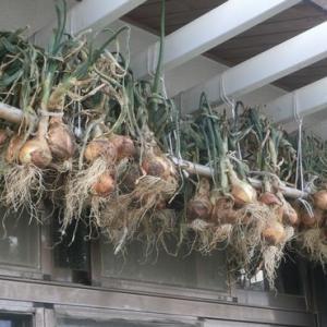 玉葱吊りとか落花生の発芽とか。