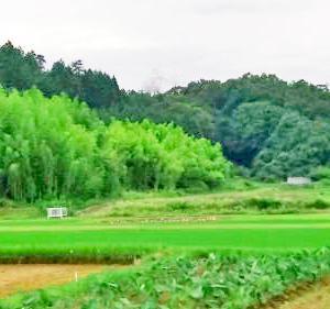 ほぼ自給自足の生活1・・・畑仕事&毎日の食事 in 日本