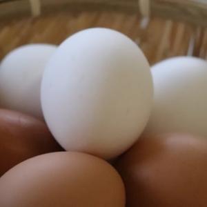 卵が賞味期限切れで10日も過ぎてた…火を通せば食べれるかも!
