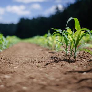 VOL.4無農薬有機栽培って稼げない?福井県でのオンライン相談