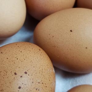 """お土産に頂いたおいしい卵""""卵明舎『魔宝卵GOLD』""""を食べてみる"""