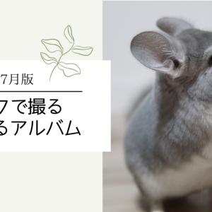 【チンチラ】たろまるアルバム~2021.6月/7月版~