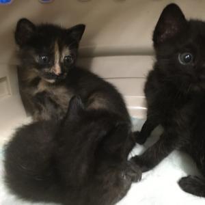 【子猫を保護】3きょうだい猫を保護した時の話【大切な事4つ】