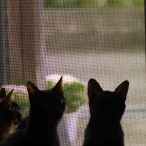 【子猫を保護】3きょうだい猫にかかった1年間の医療費