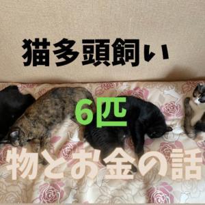 【猫多頭飼い】6匹にかかる物とお金の話【1ヶ月の費用を公開】