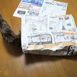 新聞紙トンネル(*゚ー゚*)