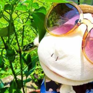 今年は夏野菜に挑戦!!