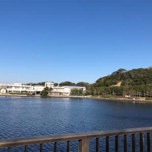 憩いの場、富岡並木船だまり公園