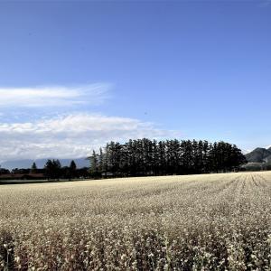 牧場は蕎麦畑